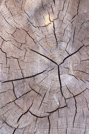 Core of a heavily cracked tree trunk
