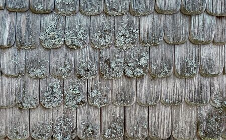 Old weathered shingles with lichens Stockfoto