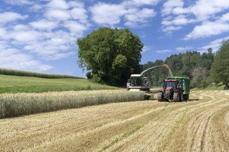 Forage harvester harvests whole crop silage for biogas Archivio Fotografico - 130136094