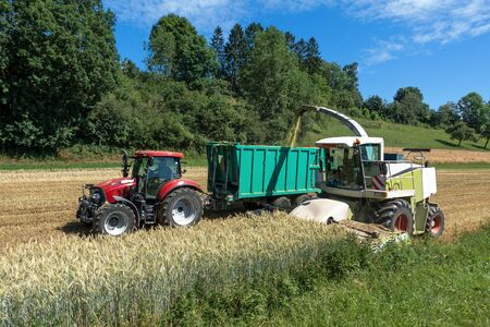 Harvest of whole plant silage with forage harvester and tractor with trailer on a cereal field Archivio Fotografico - 130136014