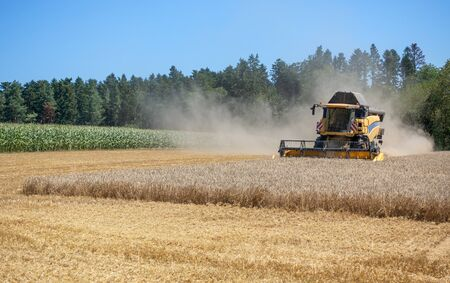 Harvester with dust cloud at the harvest of a grain field