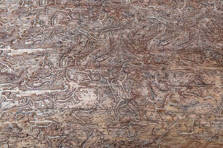 Abstract pattern in wood caused by bark beetles Stok Fotoğraf