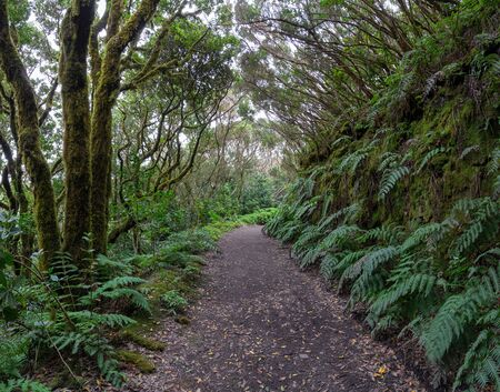 Hiking trail in the laurel forest of the Anaga Mountains in Tenerife