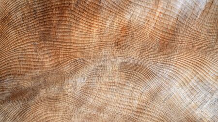 Abstract, slightly cracked texture in wood