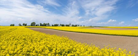 Landscape of flowering rapeseed fields and brown farmland Stock Photo