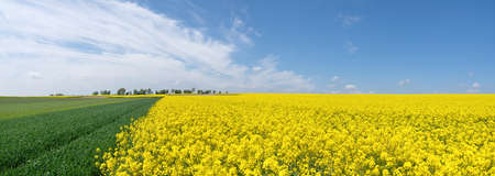 Picturesque agricultural fields in spring Stock Photo