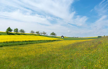 Idyllic rural scene with a large flower meadow and fields