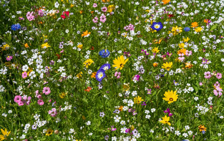Beautiful colorful flower meadow in summer with lots of different flowers Stock Photo