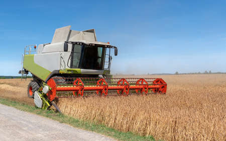 Combine harvester harvests a spelt grain field at the edge of the field next to a way