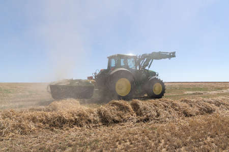Tractor with hay rake in a cloud of dust makes rows of spelt straw in hot and dry summer