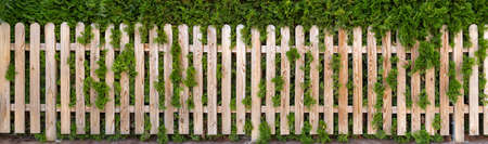 Panoramic garden fence made of light natural wood in front of a green thuja hedge