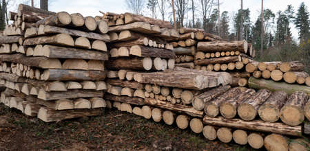 Storage of round and halved, short tree trunks in the forest - forestry scene