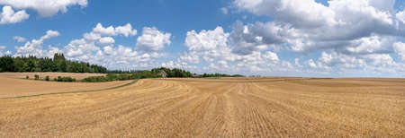 Picturesque panoramic stubble field with cloudscape and distant barn in sunny summer