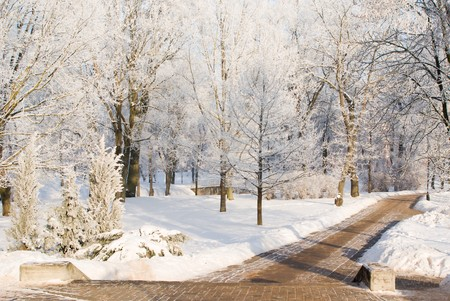 footway: Footway in snowy park at Jelgava palace, Latvia