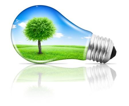 bulb fields: Lightbulb with a tree growing on field under blue sky inside