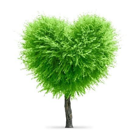 Valentine tree, love concept, heart shape tree over white background Foto de archivo