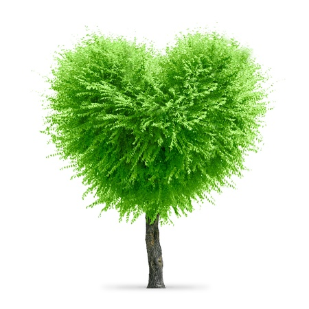 reflection of life: Valentine tree, love concept, heart shape tree over white background Stock Photo