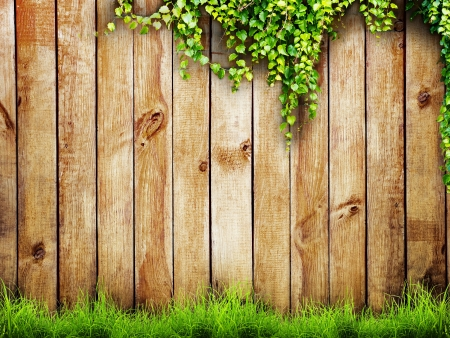 green wall: Fresh spring green grass and leaf plant over wood fence background