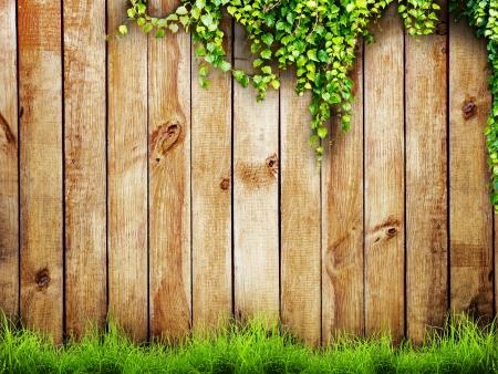 marco madera: Primavera de la hierba verde fresca y vegetales de hoja m�s de fondo cerca de madera