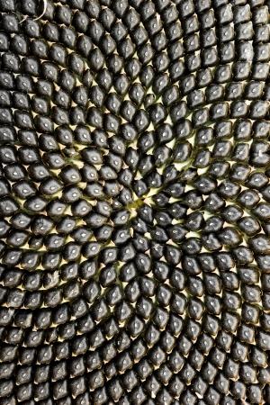 semillas de girasol: Las semillas de girasol cerca ub fondo