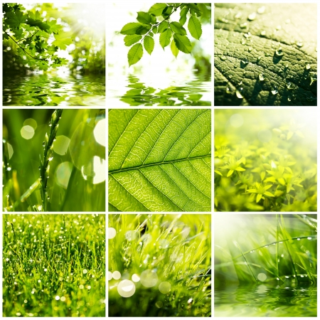 Collage of green grass and leaves. Spring  photo