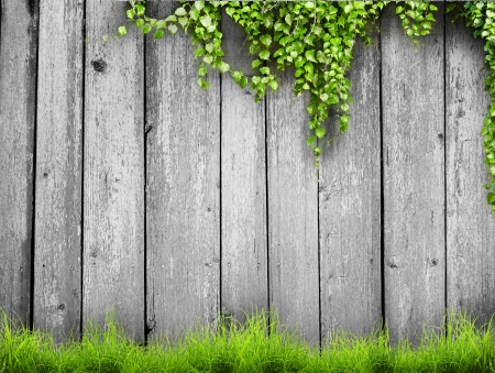 white fence: Fresh spring green grass and leaf plant over wood fence