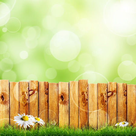 Wooden fence and green grass with white camomile flower against green bokeh photo