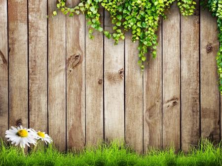 Verse lente groen gras met witte bloem kamille en blad plant over houten hek