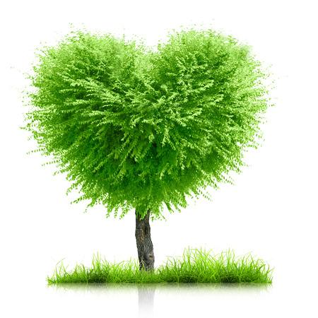 Green grass and heart shape tree