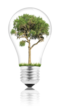 growing inside: Lightbulb with a plant growing inside Stock Photo