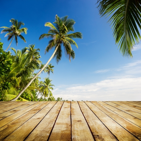 Palm trees. Beautifull tropic nature background