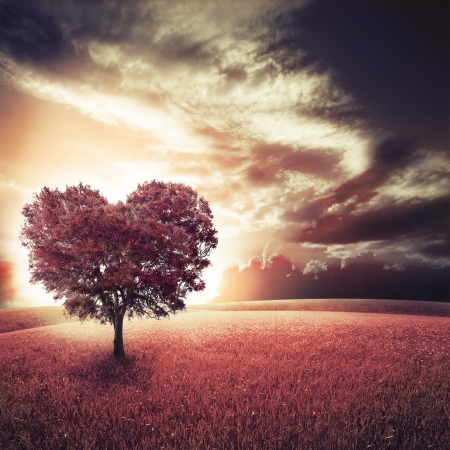 Abstract field with heart shape tree under blue sky. Beauty nature. Valentine concept background