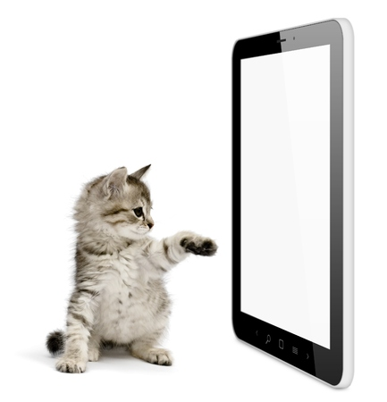 Black tablet pc on white background and kitten pushing screen. Portable computer