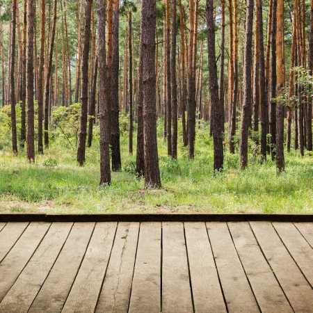 Beautiful summer pine forest and wood planks floor background photo