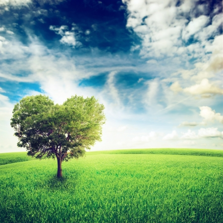 heart under: Green field with heart shape tree under blue sky  Beauty nature  Valentine concept background Stock Photo