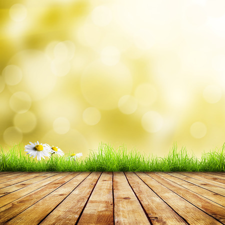 Fresh green grass with white camomile flower over green bokeh and sunlight and wood floor. Beauty natural  photo