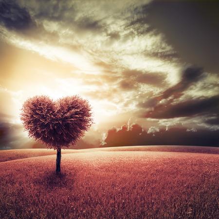 Abstracte veld met boom hartvorm onder blauwe hemel aard van de schoonheid Valentijn concept achtergrond Stockfoto