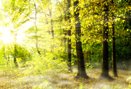 Beautiful sunlight in the autumn forest photo