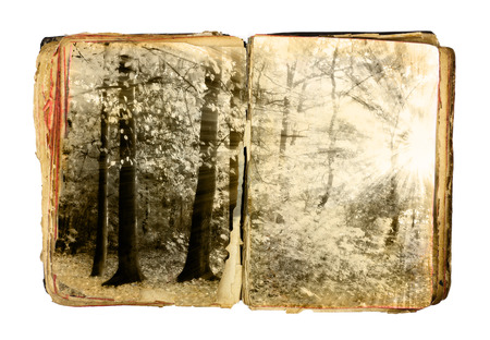 Old book with autumn forest on white background photo