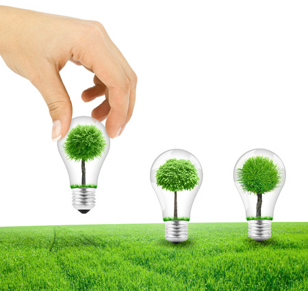 Scene of the hand plant tree in lightbulb on green grass photo