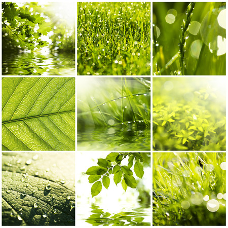 Collage of green grass and leaves  Spring backgrounds photo