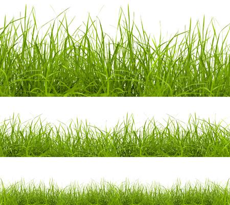白い背景に分離された緑の草 写真素材