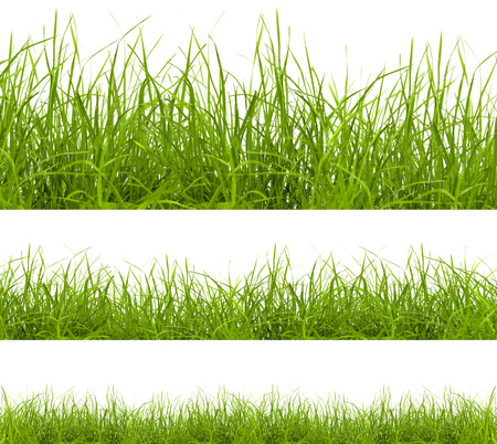 blades of grass: green grass isolated on white background Stock Photo