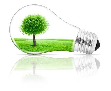 growing inside: Lightbulb with a tree growing inside