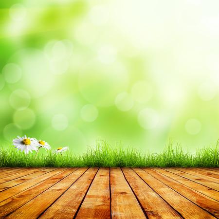 新鮮な春の緑の草とグリーンのボケ味と日光と木材床の美しさ自然の背景と白い花カモミール