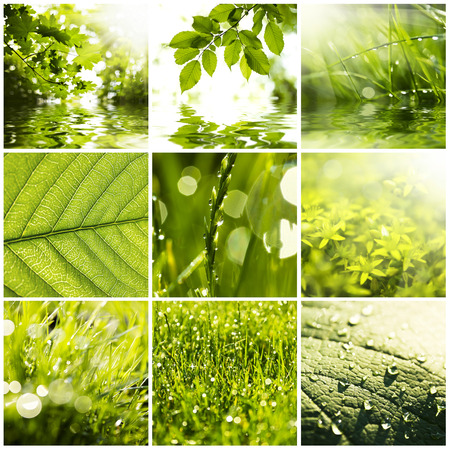 Collage of green grass and leaves. Spring backgrounds photo