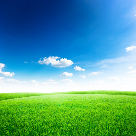 grass: Green field under blue sky. Beauty nature background Stock Photo