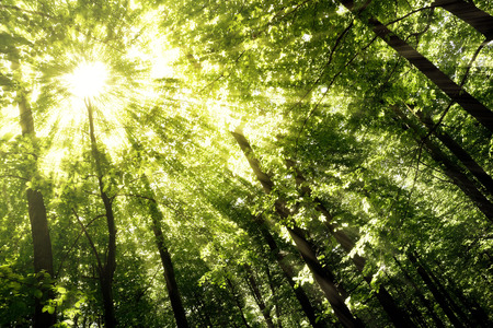 Green forest. Tree with green Leaves and sun light. Bottom view background Stock Photo