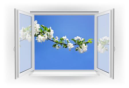 ventana abierta: Ventana abierta con la rama y cielo azul. Primavera de fondo