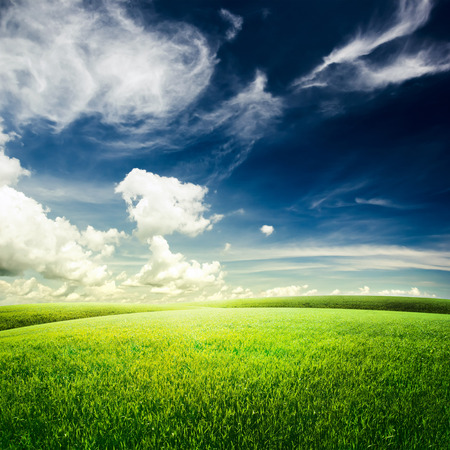 Green field under blue sky. Beauty nature background photo